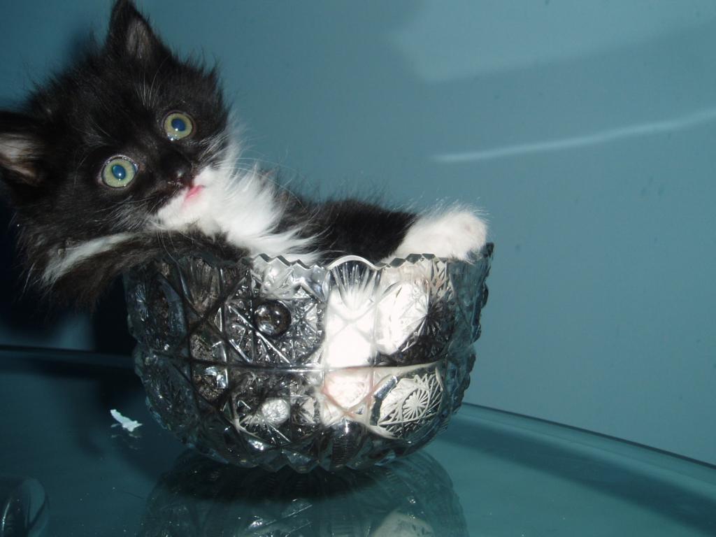 Вазы, наполненные котами. Кото-фото
