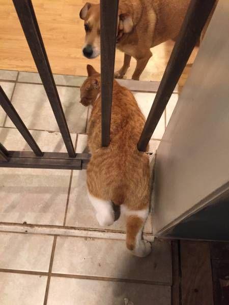 Неунывающие кошачьи, которые застряли. Кото-фото