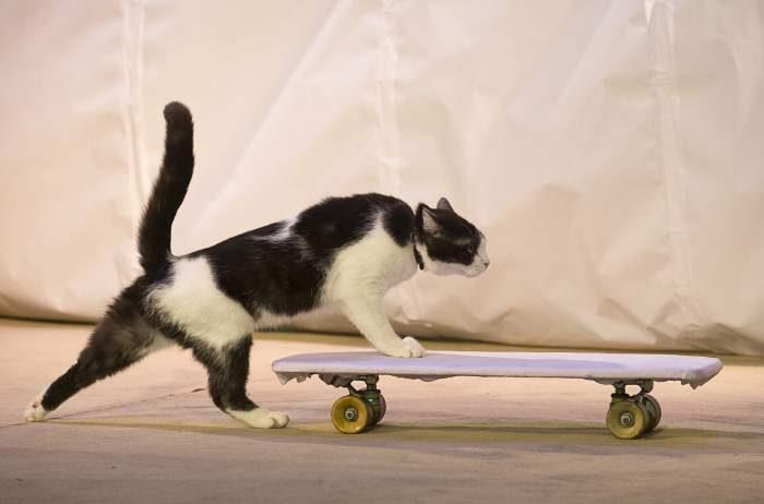 Котэ на скейтах, стремительные и не очень. Часть вторая. Кото-фото