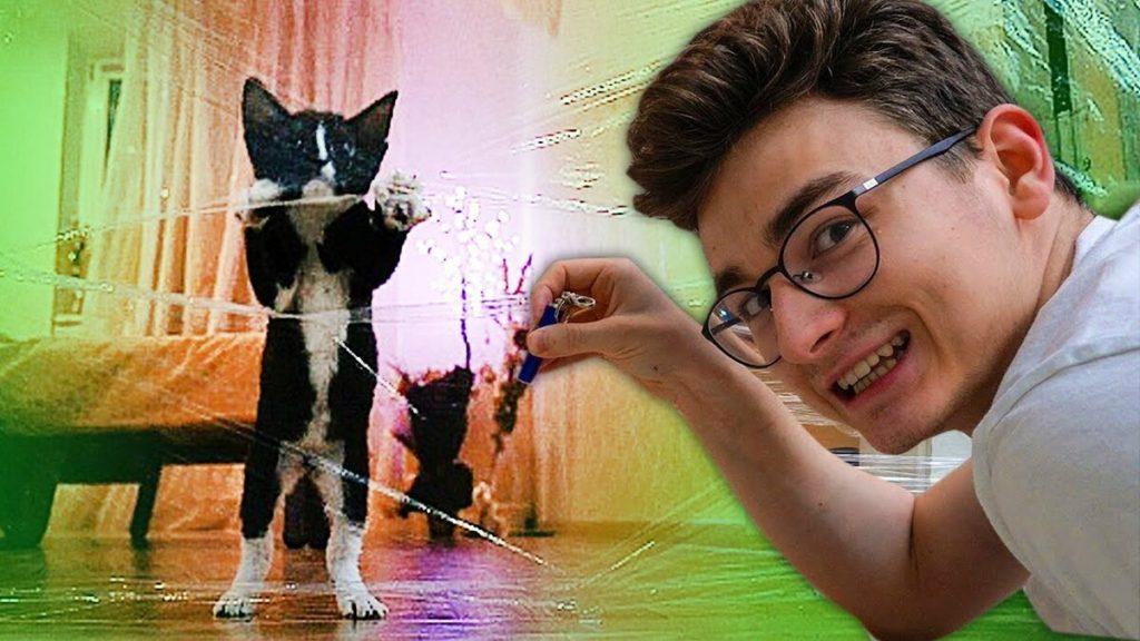 Страшные и ужасные или почему в Корее боятся кошек? Разбираемся вместе!