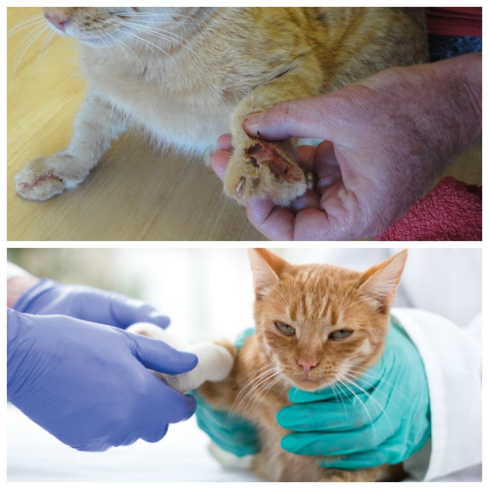 Как уберечь кошачьи 9 жизней: оказываем первую помощь нашим пушистым любимчикам правильно