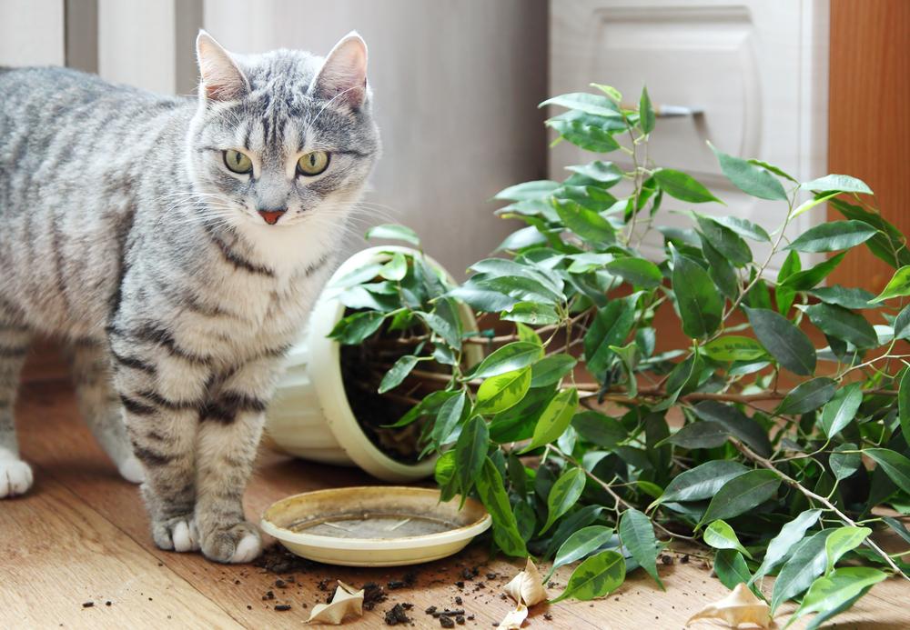 Почему кошка порой ест пыль и землю из цветочных горшков. Объяснение ветеринаров