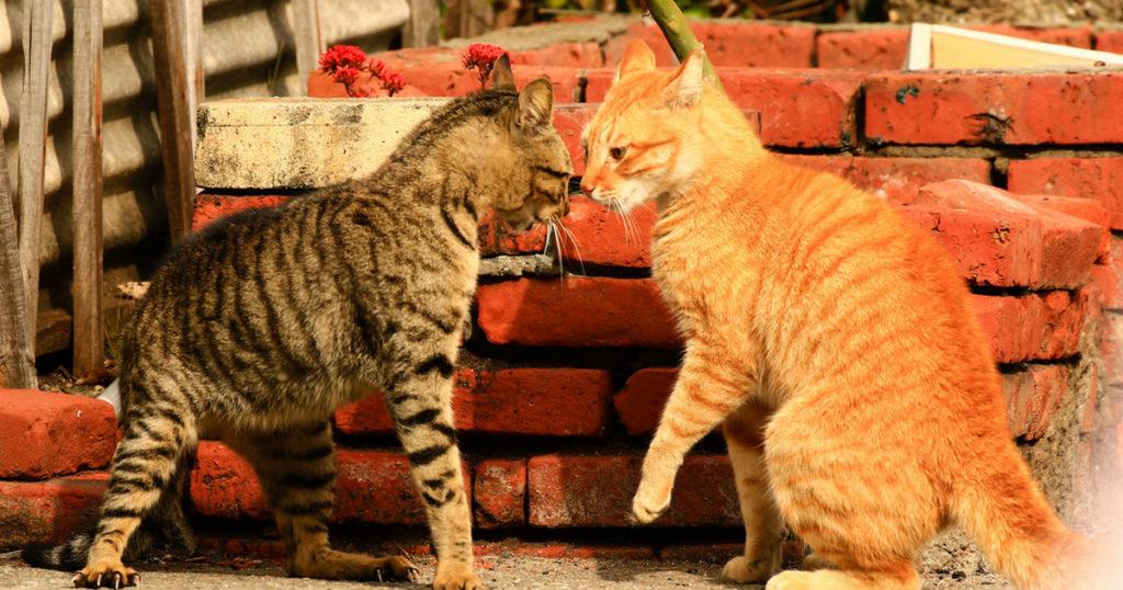 Знакомство двух кошечек у вас дома, лайфхаки. Часть 2