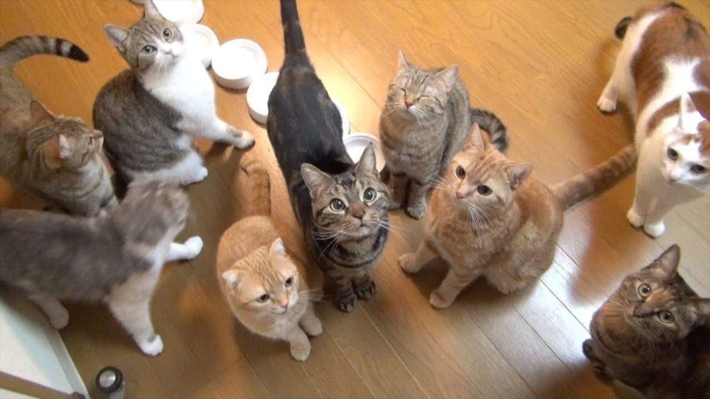 Несколько кошек в одном доме: эра хаоса или вполне мирное сосуществование? Рубрика «вопрос – ответ»