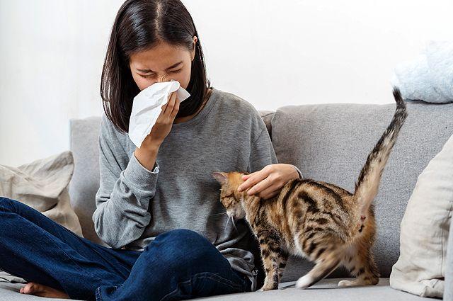 Может ли аллергик радоваться появлению пушистого котэ? Как завести питомца, если ваш организм против