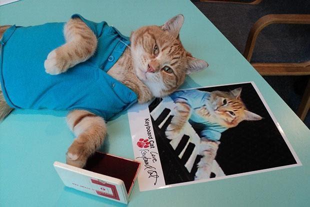5-известных-бизнес-котиков1.jpg