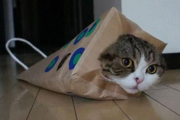 5-известных-бизнес-котиков4.jpg