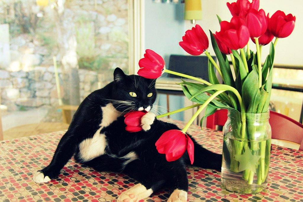 Коты и цветы. Часть вторая. Тюльпаны. Кото-фото
