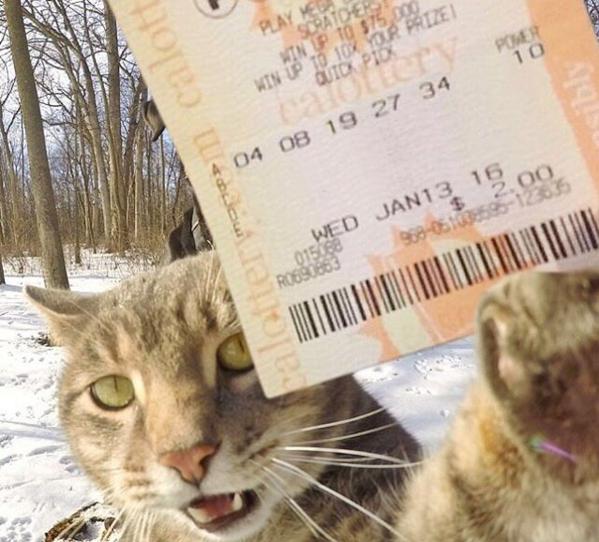 Селфи – кот Мэнни: питомец, который стал мега – популярным, благодаря своему умению фотографироваться. Кото - фото