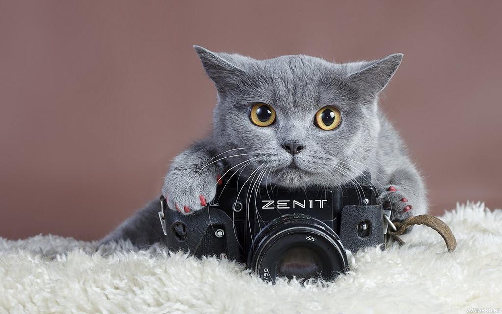 zhivotnye_kot_fotoapparat_17195.jpg