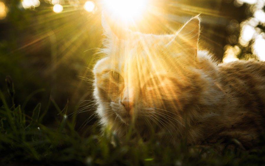 Советы котикам, которые решили «взять» себе в дом человека. Юмористическая статья, которую вы можете почитать своим пушистикам