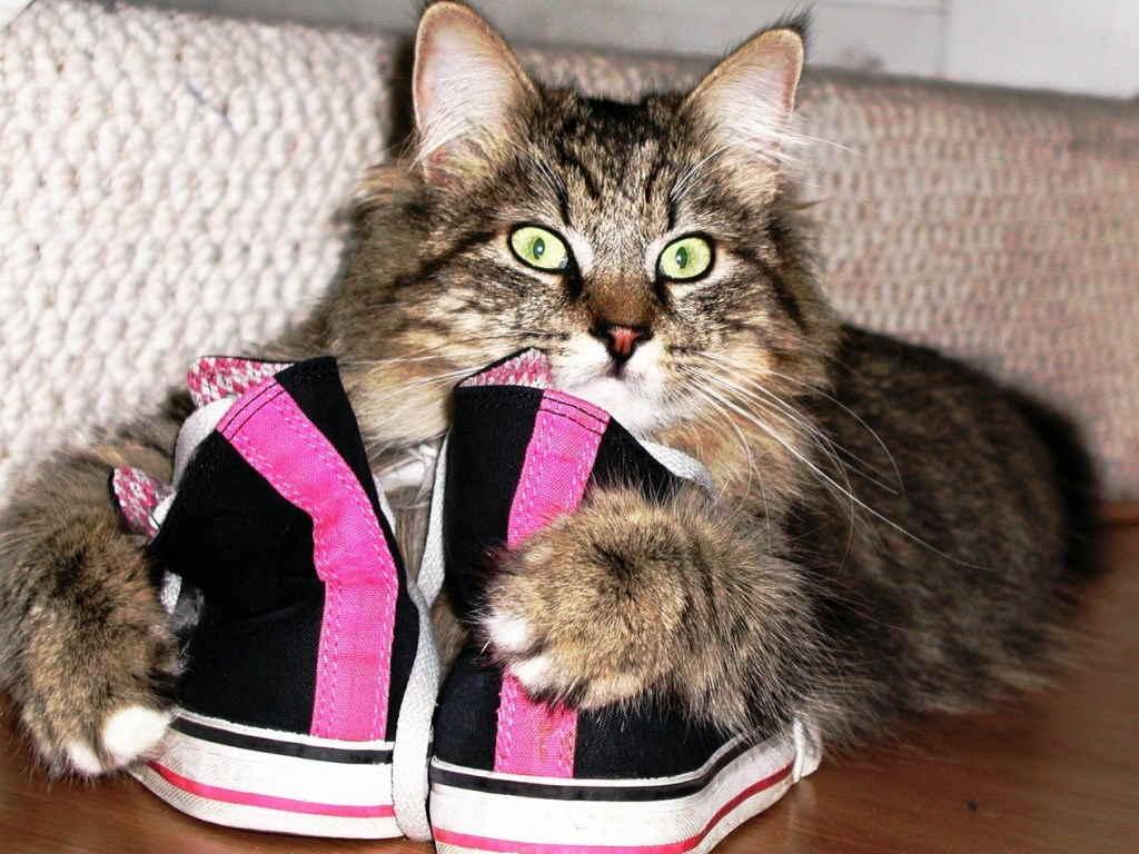 Кошачьи, которые завладели человеческой обувью. Часть первая. Кото-фото