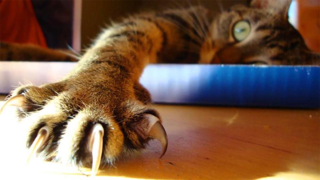 Когтистые лапы с мягкими подушечками. Кото-фото. Часть вторая