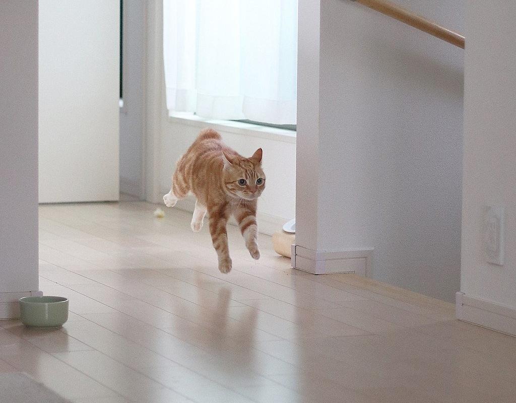 9 привычек вашей кошки, которые всегда вас удивляли. Это интересно!