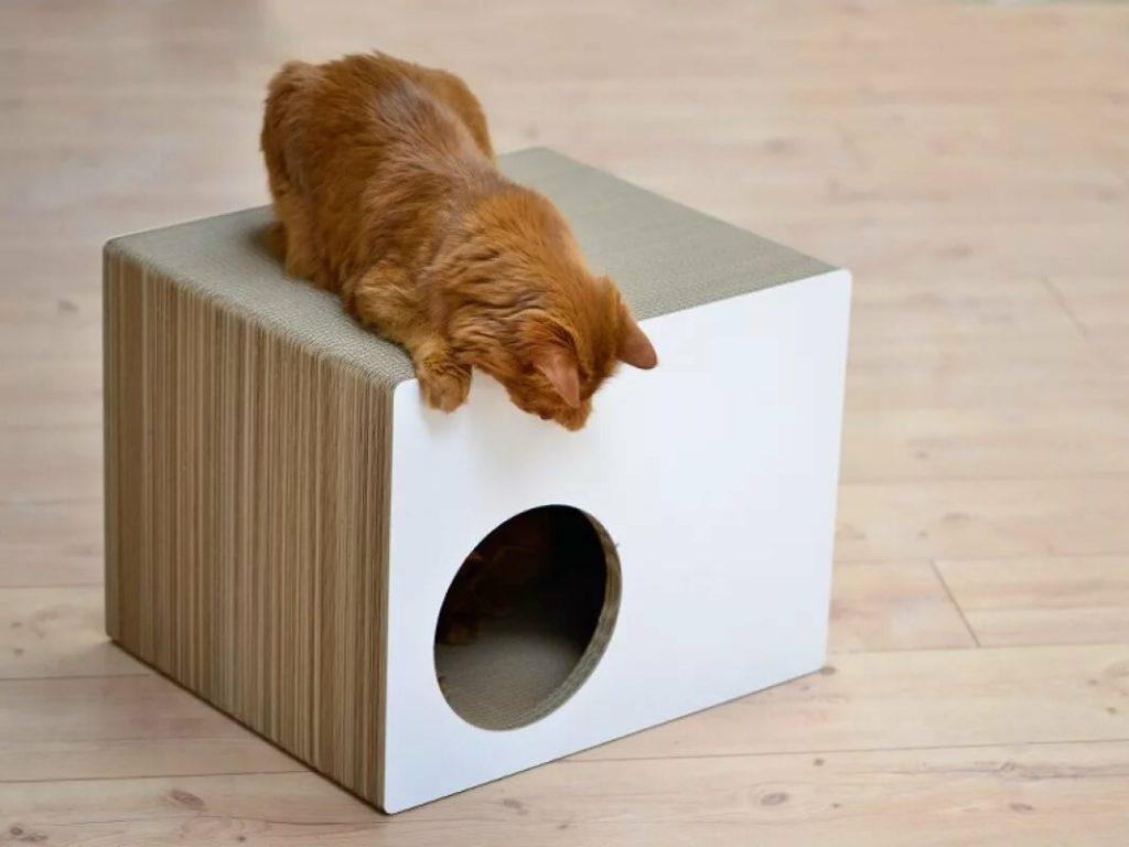 Кошкин дом: как подготовить свое «человеческое» жилище к появлению нового квартиранта на пмж? Обустраиваем кошачью опочивальню