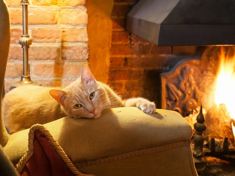 На страже порядка: в каких случаях ваша кошка покажет, что в доме есть негатив